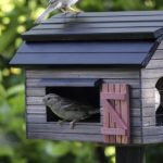 Casette per uccelli: dove posizionarle e come?
