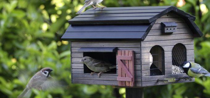 casette per uccelli in giardino dove metterle